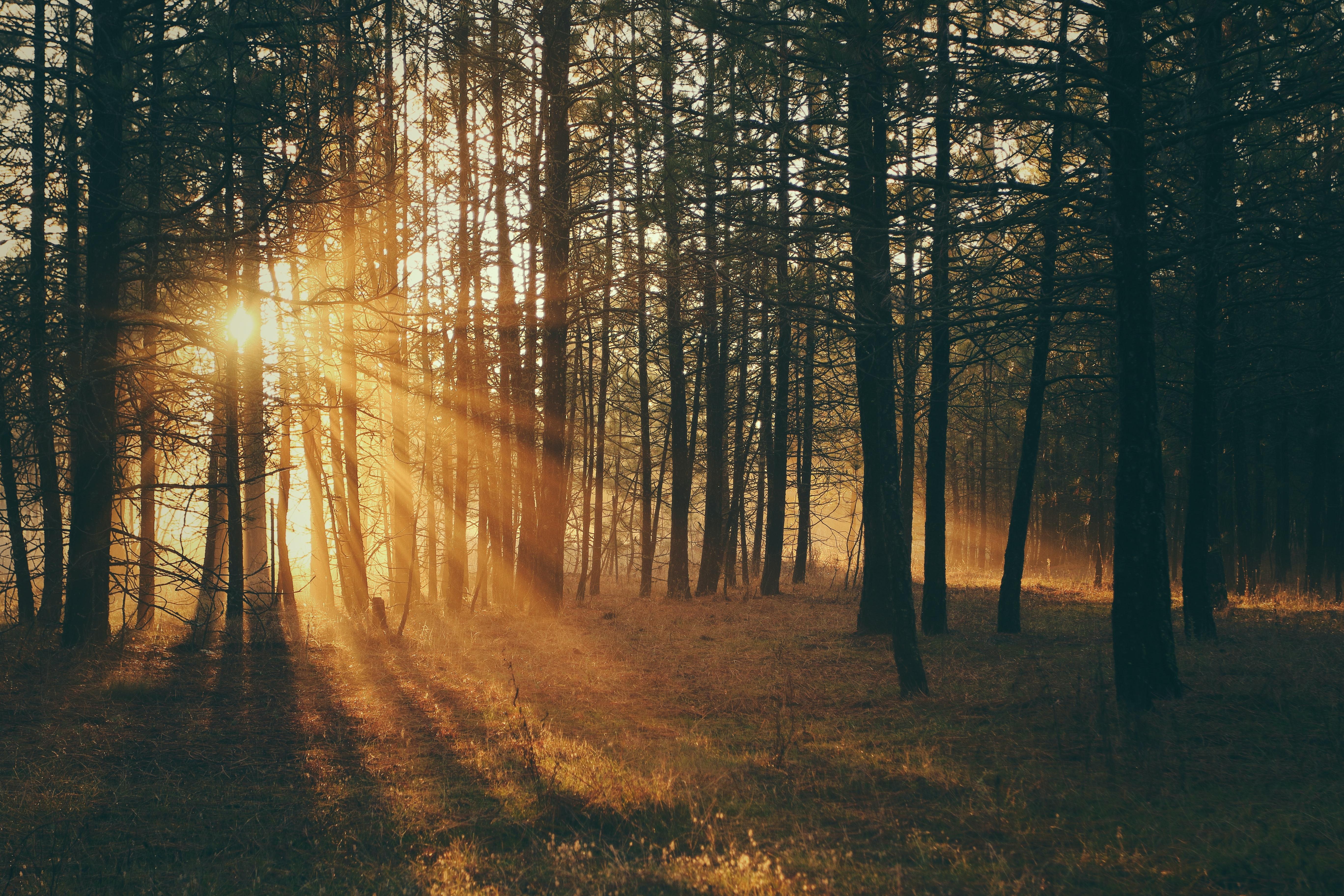 Sunrise in a wood